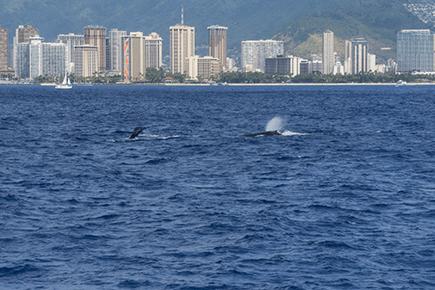 Star of Honolulu Whale Watch Tour
