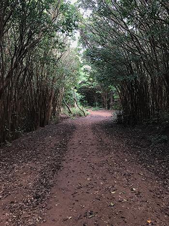 Wiliwilinui Trail 1