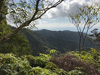 Wiliwilinui Trail 3