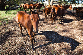 Horseback Ride in Style 1