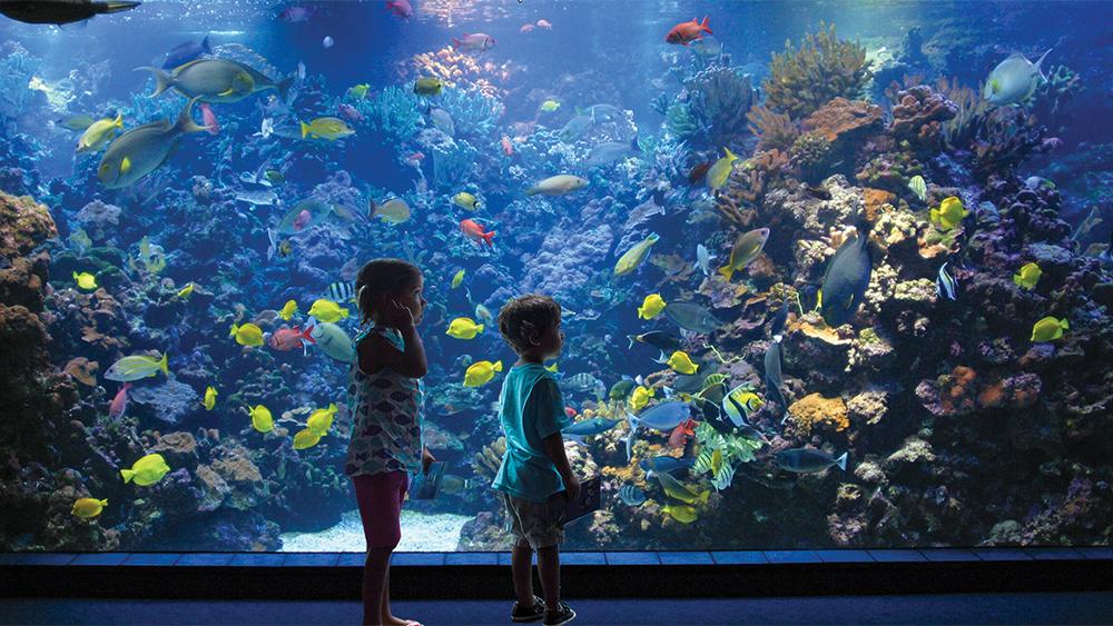 Maui Ocean Center Living Reef Exhibit