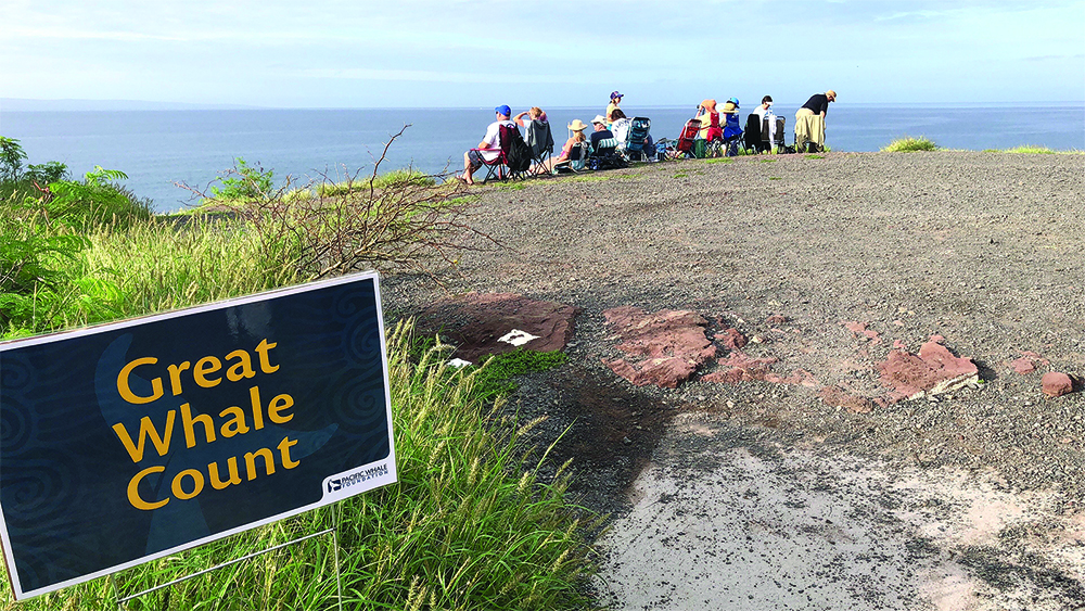 Great Whale Count