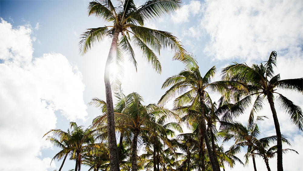 Palm Trees on Coconut Coast