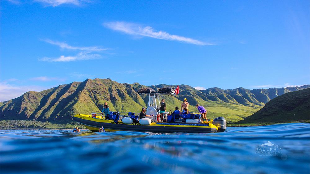 Dolphin Excursions Tour