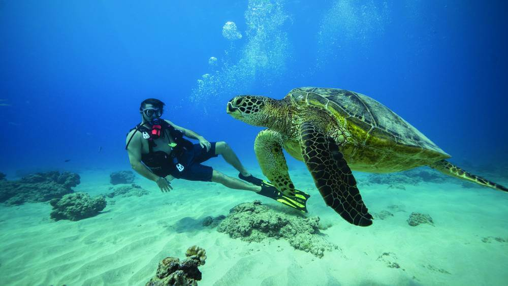 Discover a beautiful underwater world with Dive Oahu