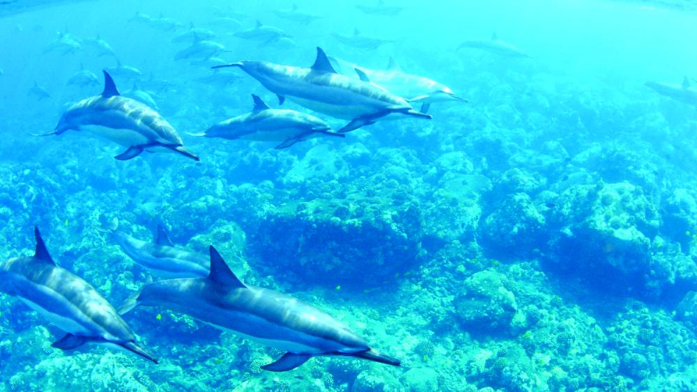 See resident dolphins in their natural habitat with Dolphin Discoveries