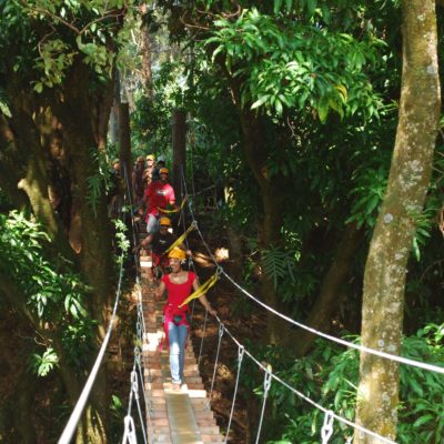 Botanical World Adventures