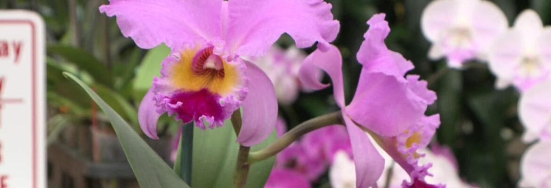 Akatsuka Orchid Garden