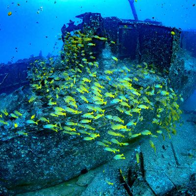 Atlantis Submarines Waikiki