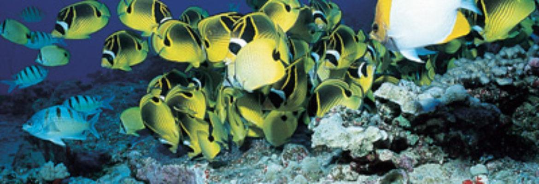 Boss Frog's Snorkel, Surf & Cycle – Kauai