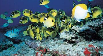 Boss Frog's Snorkel, Bike & Beach Rentals - Kauai