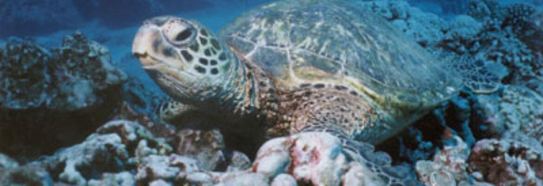 Boss Frog's Snorkel, Surf & Cycle – Big Island