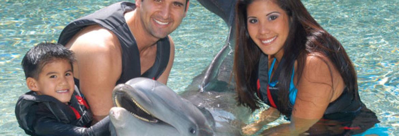 Dolphin Quest – Big Island