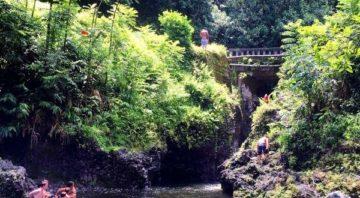 Maui County Farm Tours