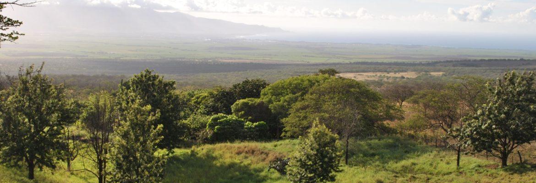 Kupaa Farms