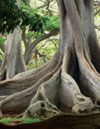 National Tropical Botanical Gardens