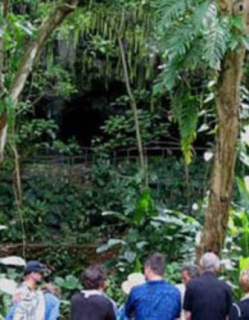 Smith's Fern Grotto Cruise